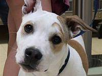 Buster's story Buster is a sweet boy hoping to find his