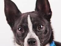 Buster's story *REQUIRES A LONGER ADOPTION PROCESS AND