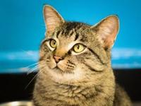 Buster's story Buster is a playful, confident cat. He