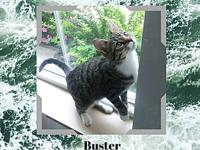 Buster's story Buster is full of energy and loves to