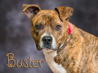 Buster is at the shelter because his previous owner
