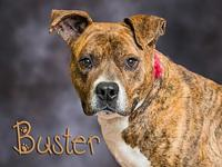 Buster's story Buster is at the shelter because his