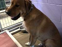 Buster's story This engaging and pleasant boy is Buster
