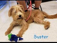 Buster's story You can fill out an adoption application