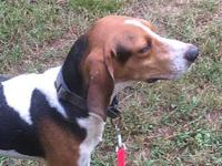My story Registered Treeing Walker CoonhoundAlthough