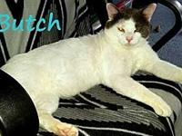 Butch's story Butch is a fabulous cat! Here at his