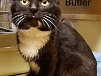 Butler's story Greetings, I'm Butler, a 2 yr old,