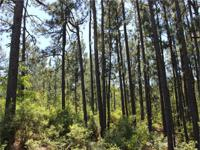 * Grow Timber and Hunt in a QDM County * Various Stands