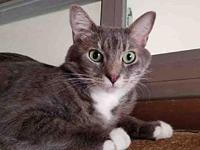 BUTTERCUP's story Buttercup is a 2 year old spayed