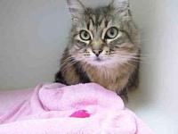 BUTTERCUP's story BUTTERCUP - ID#A085688 is a female,