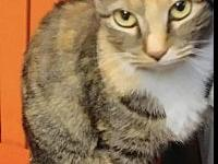 Buttercup's story Buttercup was recently returned to us