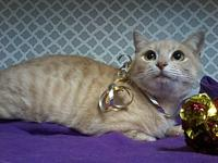 Buttercup(Lap Snuggler!)'s story This pretty kitty is a