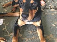 Buttercup's story Buttercup is a female Rottweiler mix