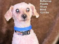Buttercup's story Please contact Constance