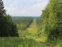 Great deal waiting for you! 185 Acres of Hunting Land
