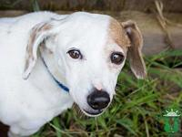 Butters's story This sweetheart is Butters a 1 yr