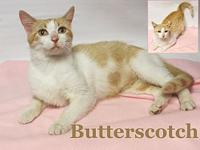 Butterscotch's story Butterscotch was adopted to a
