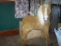 The electrical horse Butterscotch is for sale! $50.00