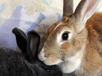 Butterscotch and Bennie were rescued by a family about