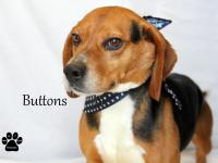 Buttons is adorable and seems good with other dogs.  We