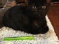 Buttons's story Looking for a little house panther?