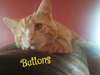 Buttons's story Please understand we must conduct home