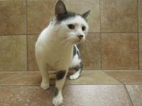BUZZ *Petsmart GB*'s story 5 years old Domestic