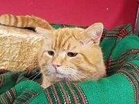 My story Buzz is an orange tabby who is 7-8 years old.