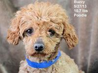 Buzzy's story Please contact Constance