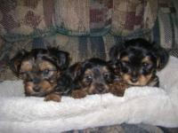 These puppies are 7 weeks old will be up to date on