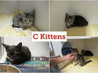 C Kittens (3)'s story C KITTENS (CLAUDIA-adopted,