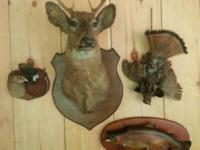 Changing decor, need to sell. 9 Point buck Deer Head
