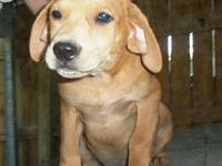 Caboodle's story Meet Caboodle (m), Winslow (m) and