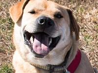 Cadet's story Cadet is a happy, affectionate boy who is