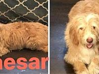 Caesar's story Caesar is estimated to be 5-6 years old,