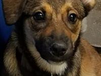 Cage 01 1/2's story Moxie, Female Shepherd Mix NIKKA &