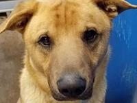 Cage 17's story Male Shepherd Mix Look at his sweet