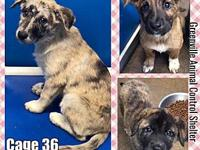 Cage 36 - 1330's story 1330 Three super adorable female