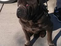 Bruno is 5yrs old,very well behaved, With children and