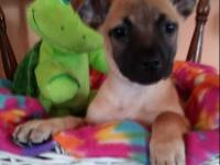 Cain we believe is a small breed terrier maybe chi mix,