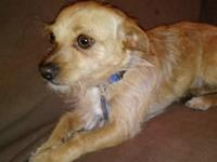 Houdini is a sweet playful rescue puppy only about 8