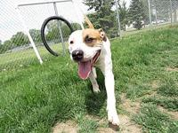 Cajun's story Cajun is a 1 year old male Mixed Breed