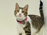 My story I came to the SPCA because my owner could no