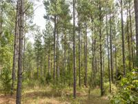 277 acre timber and recreational tract. This property