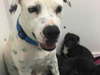 Cali is a sweet girl who gets along with other dogs. I