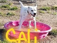 Cali's story Cali is a sweet girl who gets along with