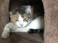 Cali Age: 3-years Status: Available for Adoption