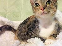 Cali's story Cali is a female calico cat, born on