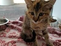 Cali's story I'm a playful kitten looking for the