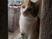 Cali is a gorgeous calico cat with brilliant green eyes